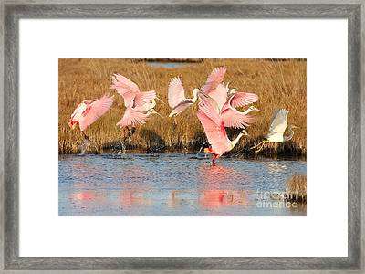 Follow The Leader Framed Print by Jennifer Zelik
