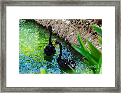 Follow The Leader 2 Framed Print
