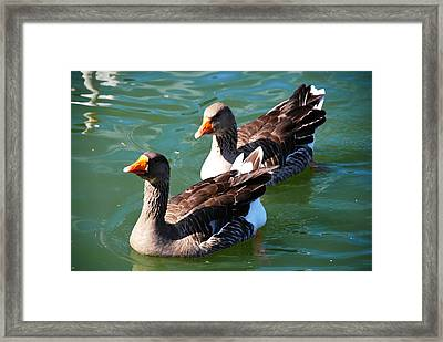 Follow The Leader Framed Print by Linda Segerson