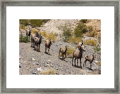 Follow The Leader Framed Print by Tammy Espino