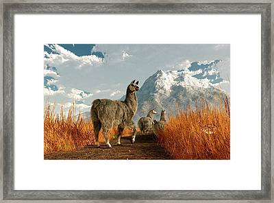 Follow The Llama Framed Print