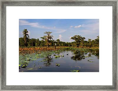 Follow The Markers Framed Print by Lana Trussell