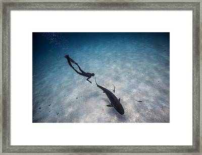 Follow The Tiger Framed Print