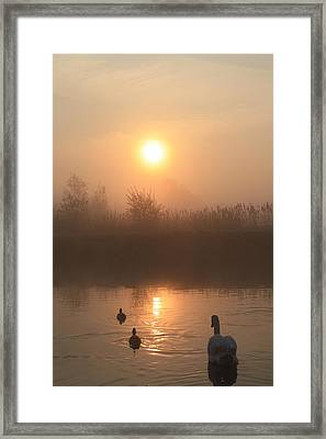 Follow Us Framed Print by Linsey Williams