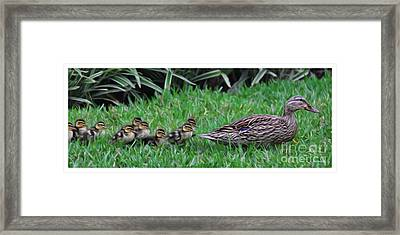 Following Mommy Framed Print