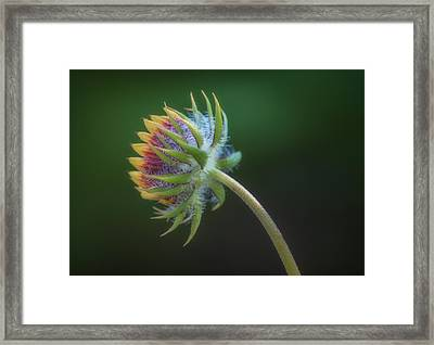 Framed Print featuring the photograph Following The Light by Jacqui Boonstra
