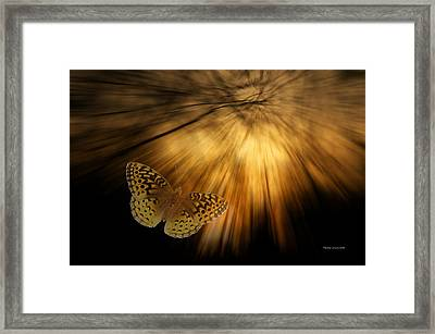 Following The Light Yellow Butterfly Framed Print by Thomas Woolworth