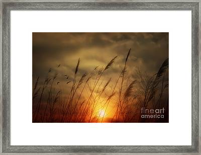 Following The Sun Framed Print