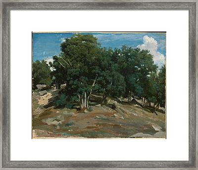 Fontainebleau Oak Trees At Bas-br�au Framed Print by Camille Corot