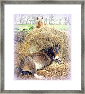 This Is Our Food And Bed And Our Whole Life, It's All We Ever Need  Framed Print
