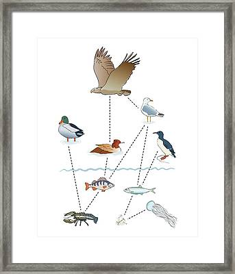 Food Chain Framed Print by Jeanette Engqvist