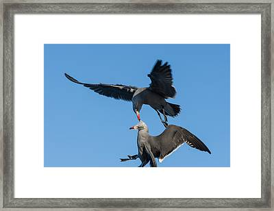 Food Fight Framed Print by Sonny Marcyan