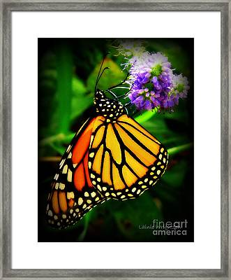 Food For Flight Framed Print by Lainie Wrightson
