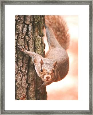 Is It Safe To Come Down Framed Print