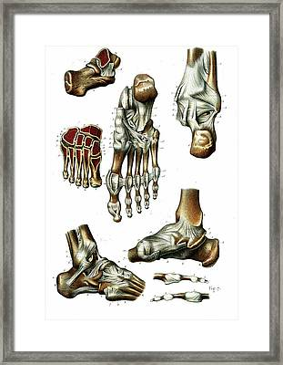 Foot Anatomy Framed Print by Collection Abecasis