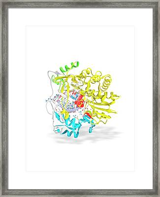 Foot-and-mouth Disease Virus Drug Complex Framed Print by Ramon Andrade 3dciencia