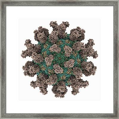 Foot-and-mouth Disease Virus Framed Print by Science Photo Library