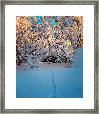 Foot Prints And Trees In The Frozen Framed Print