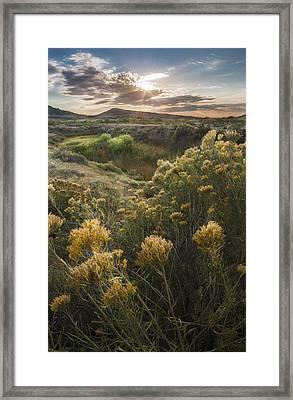 Foothills Sage Framed Print