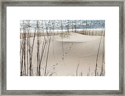 Footprints In The Sand Framed Print