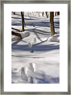 Footprints In The Snow Framed Print by Louise Heusinkveld
