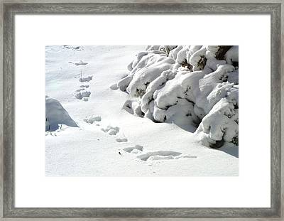 footprints in the Snow Framed Print by Rachel Christine Nowicki