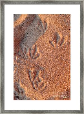 Footprints  Framed Print by Jon Neidert