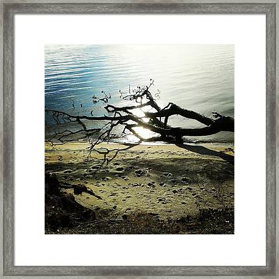 Framed Print featuring the photograph Footprints by Thomasina Durkay