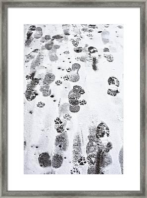 Footprints Framed Print by Tom Gowanlock
