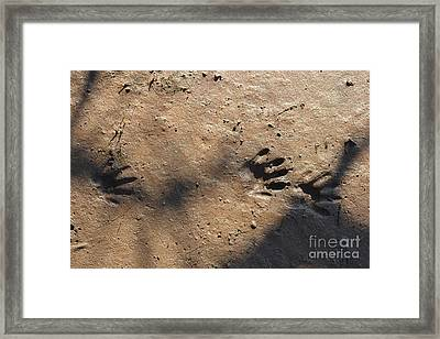 Footprints2 Framed Print