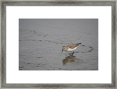 Framed Print featuring the photograph Footsteps by James Petersen
