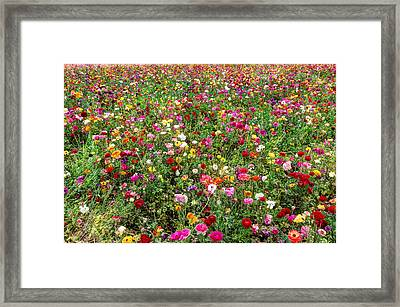 For As Far As The Eye Can See Framed Print by Heidi Smith
