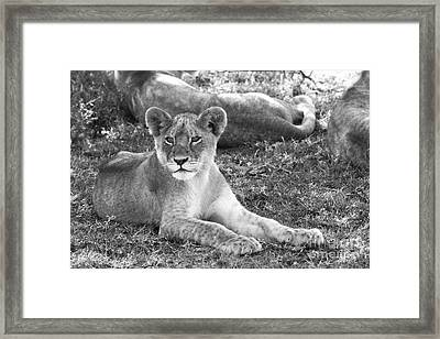 For Elsa  Framed Print by Chris Scroggins