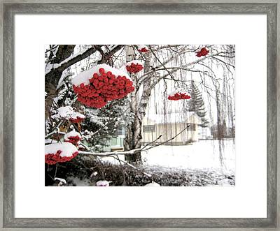 For The Birds Framed Print by Shirley Sirois