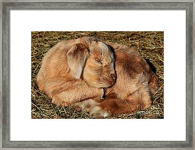 For The Love Of Animals Framed Print by Leslie Kirk