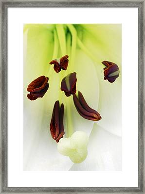 For The Love Of Lilies 1 Framed Print by Wendy Wilton