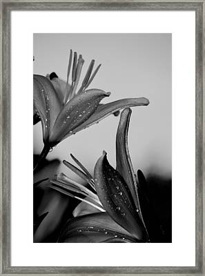 For The Love Of Lillies Bw Framed Print by Lesa Fine