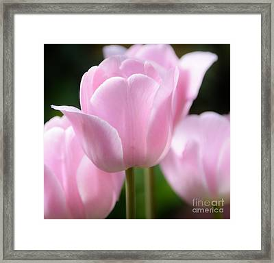 For The Love Of Pink Framed Print by Kathleen Struckle