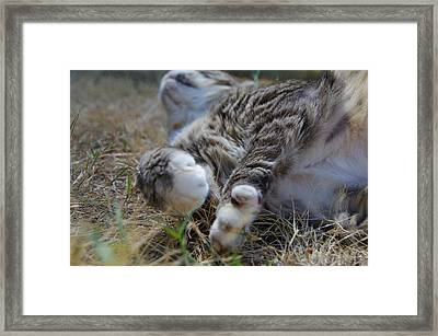 For The Love Of Stretching Framed Print by Marilyn Wilson
