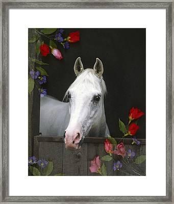 For The Roses Framed Print by Melinda Hughes-Berland