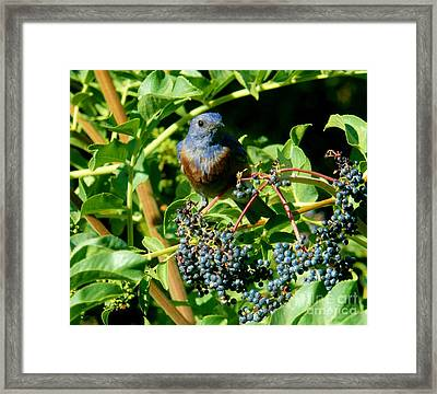 For You - Blue  - 2 Framed Print by Jacquelyn Roberts