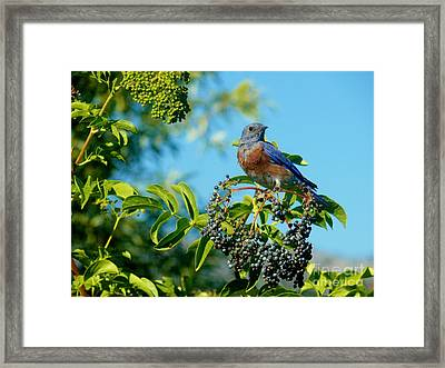 For You - Blue Framed Print by Jacquelyn Roberts