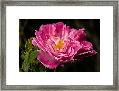 Framed Print featuring the photograph For You by Edgar Laureano