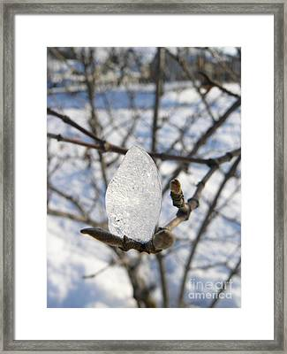 Framed Print featuring the photograph For You by Jane Ford