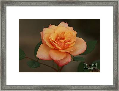 For You... Framed Print