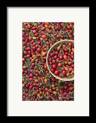 Sweet Briar Framed Prints