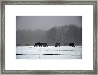 Framed Print featuring the photograph Foraging by Glenn Gordon