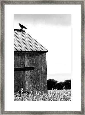 Foraging Two Framed Print by Jerry Cordeiro