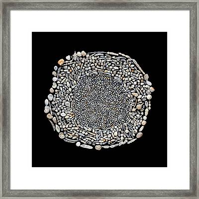 Foraminifera From Challenger Expedition Framed Print
