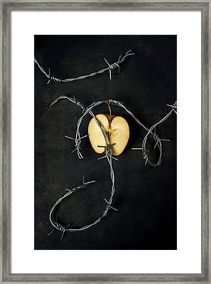 Forbidden Fruit Framed Print by Joana Kruse